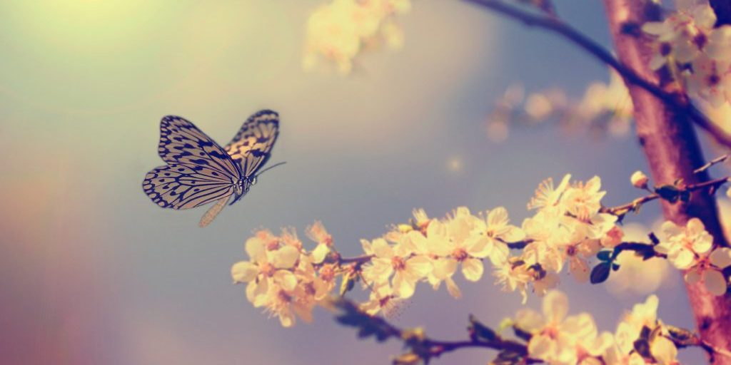 Papillon verliesverwerking en Het Momentum vlinderjpg